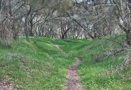 trails along the American River